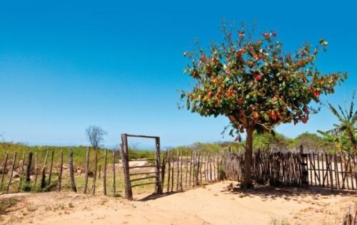 Dia da árvore - Fernando Chiriboga